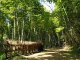 木漏れ日が差し込む竹林