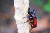 beetle on a tree