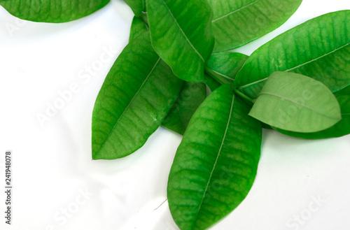 Green leaf on white background. - 241948078