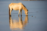 Wild Horse - 241956490