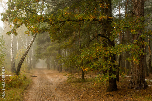 Forest. Fog. Autumn leaves. Autumn colors.