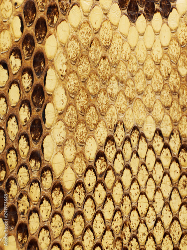 Snake leather texture - 241973643