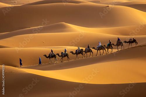 Camels in desert - 241990235