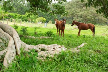 Cavalos IMG_8425