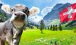 Leinwandbild Motiv Kuh in den Alpen