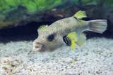Fish in the Osaka Aquarium Kaiyukan, Japan - 242001849