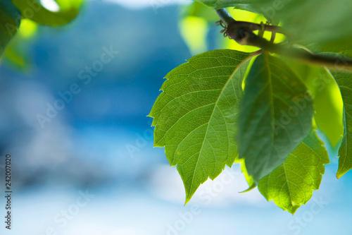 Foto Murales Green leafs