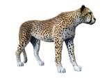 3D Rendering Big Cat Cheetah on White - 242007213
