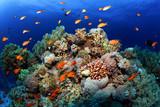 Coral reefs Red Sea. General plan underwater.