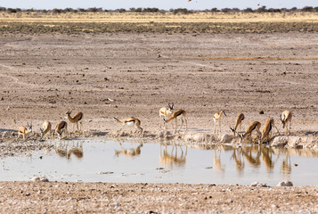 Animals arriving at water hole