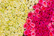 yellow and pink roses background