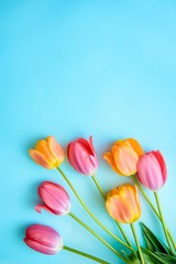 Tulips on blue background with copy space