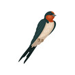 Swallow graceful bird vector Illustration on a white background