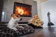 Leinwanddruck Bild - Jack russel terrier sleeping on a white rug near the burning fireplace. Resting dog. Hygge concept