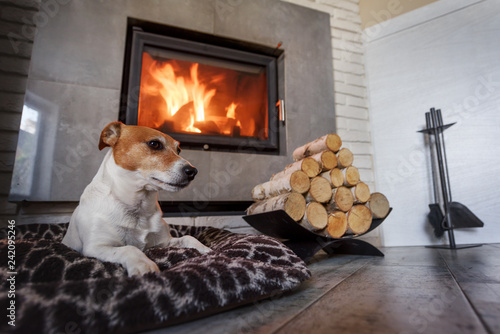 Leinwanddruck Bild Jack russel terrier sleeping on a white rug near the burning fireplace. Resting dog. Hygge concept