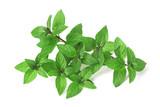 Fresh mint - 242096403