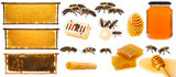 bees and honey collection isolated on a white background