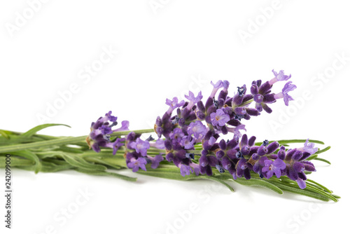 Lavender flowers - 242099000