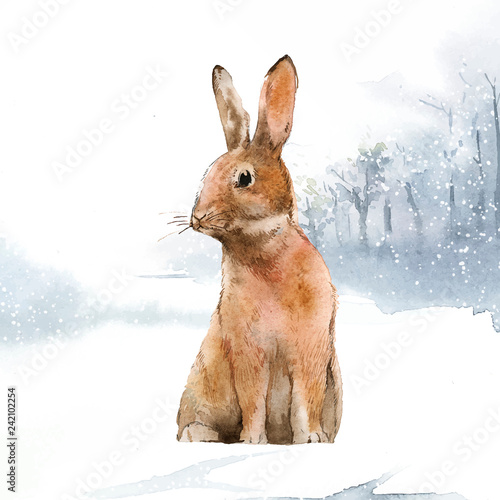 Wild hare in a winter wonderland painted by watercolor vector - 242102254