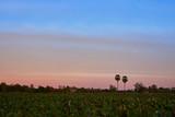 Lotus Field With Beautiful Sunset Sky.