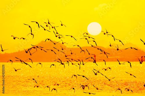Leinwandbild Motiv Silhouetted Flock of Ducks Flying in the Sunset Sky