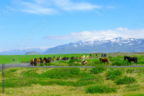obraz lub plakat Horses and countryside in south Iceland