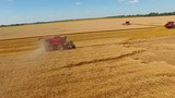 Harvester mowing wheat in the field. Red combine. Aerial view - 242138612