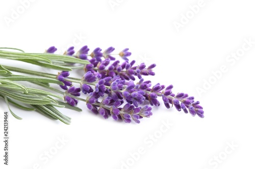 Bouquet of lavender. - 242139464