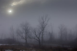 Fog makes woodlands look spooky, Mohawk Valley, New York State, USA - 242150264
