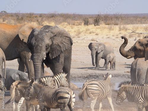 Etosha national park Animales