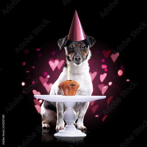 Birthday Dog With A Little Cake Against Black Background