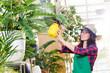 Floristin besprüht lächelnd die Pflanzen im Gewächshaus mit einer Pumpflasche