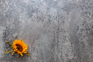 A stone natural empty wall with space for text. Copy space. Sunflower as decoration