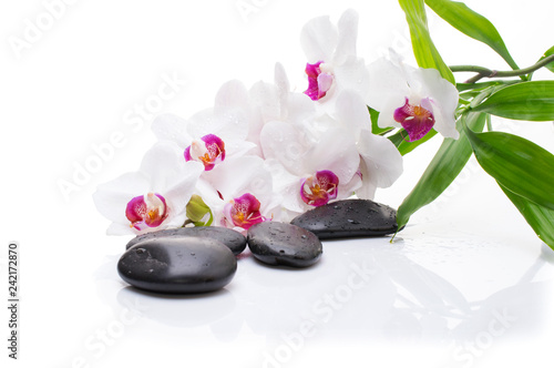 Spa white orchid with massage stones on white background.