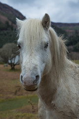 White Horse in the Lake District