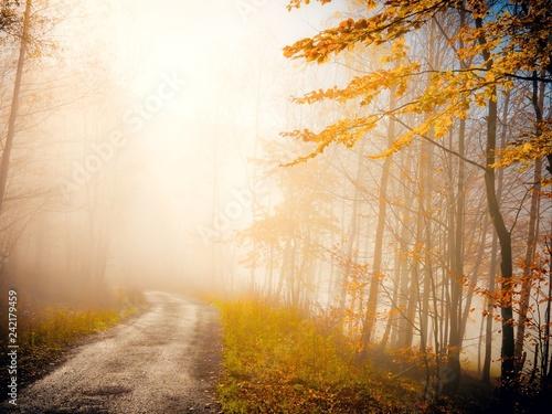autumn nature in fog