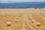 Rural landscape with straw round bales at the end of the harvest season. - 242183883