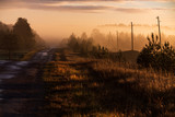 Early, mystical, misty autumn morning in the countryside, sunlit road, pine trees, power poles and forest in the distance; everything is yellowish-brown in shades - 242190237