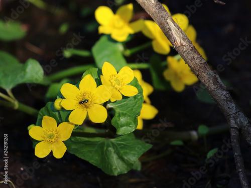 Wildflowers - 242191261