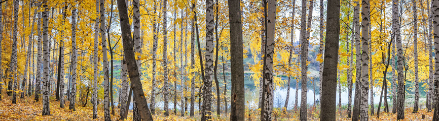 Birch grove against the lake on sunny autumn day, landscape, panorama, banner © rustamank