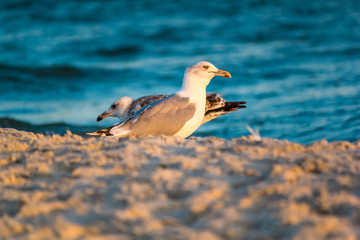 Seagulls on the coast on the background of the sea under the hot summer sky © rustamank