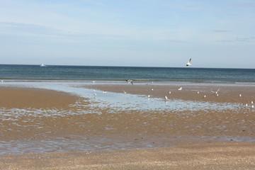 #Sun #Beach #Houlgate #Mouette #Sable © Delphine