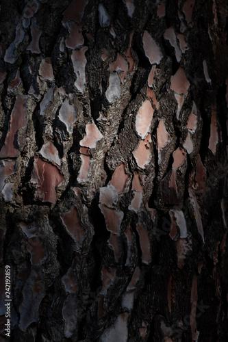 Corteza de árbol iluminado - 242192859