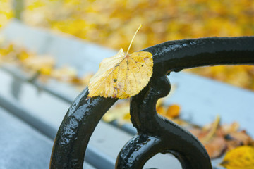 Autumn landscape in rainy day - view of the yellow fallen leaf on bench in park, closeup © rustamank