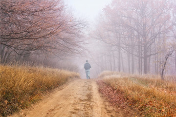 Autumn landscape - morning jog on dirt road in the autumn forest with fallen leaves in the fog © rustamank