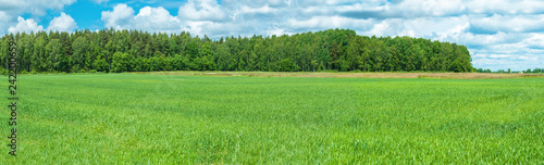 Panorama of green field and forest in spring.