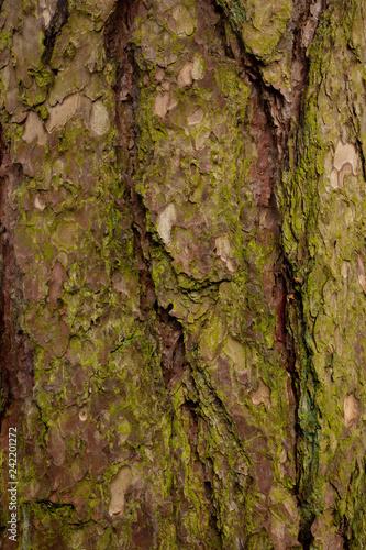bark of a tree - 242201272
