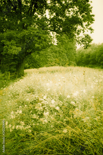 Green meadow field with trees and wildflowers in rural countryside landscape image