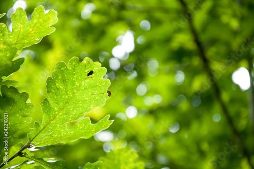 obraz lub plakat drops on leaf