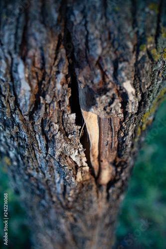 crack in bark - 242216068